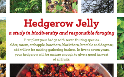 Hedgerow Jelly – a study in Biodiversity and Responsible Foraging