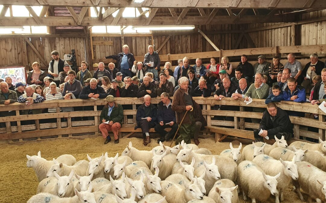 Crofting Federation calls the Brexit deal an inadequate stitch-up