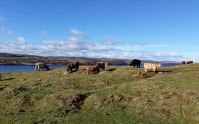 Fairer convergence payments a welcome win for crofters