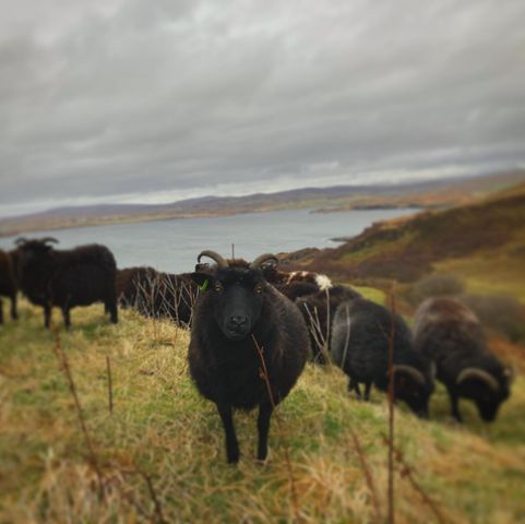 Crofting delivers for climate and will use the promised payment