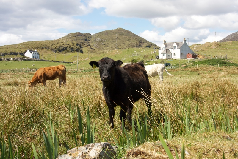 New approach needed to get crofts back into use says Crofting Federation gathering on access to crofts