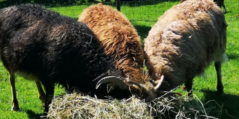 Finding the Right Insurance for Social Crofting