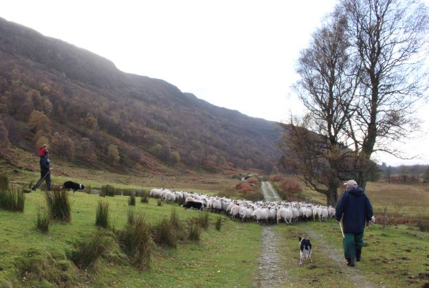 Promised actions for crofting missing from Programme for Government says Crofting Federation